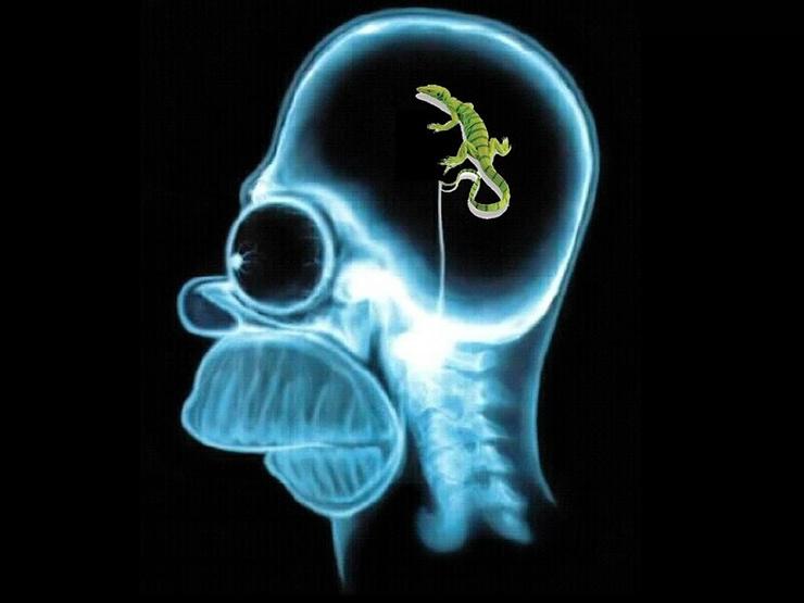 psychology of fundraising limbic brain